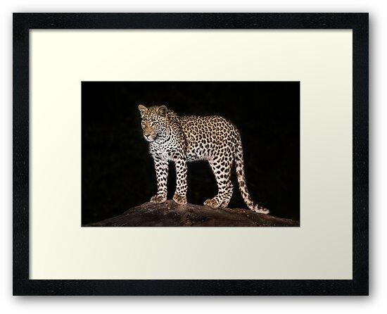Leopard in camp by Neville Jones
