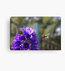 Mr Bumble Canvas Print