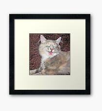 cute kitten smiling  Framed Print