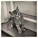 Longing kitten by Morten Kristoffersen