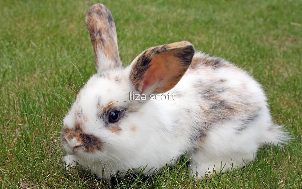 sweet baby rabbit by liza scott