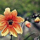Pretty Flower by Glenna Walker