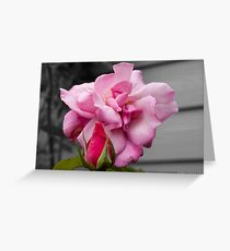 Red & Pink Roses Against Black & White Background Greeting Card