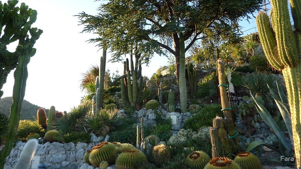 Cactus Garden in Eze by Fara