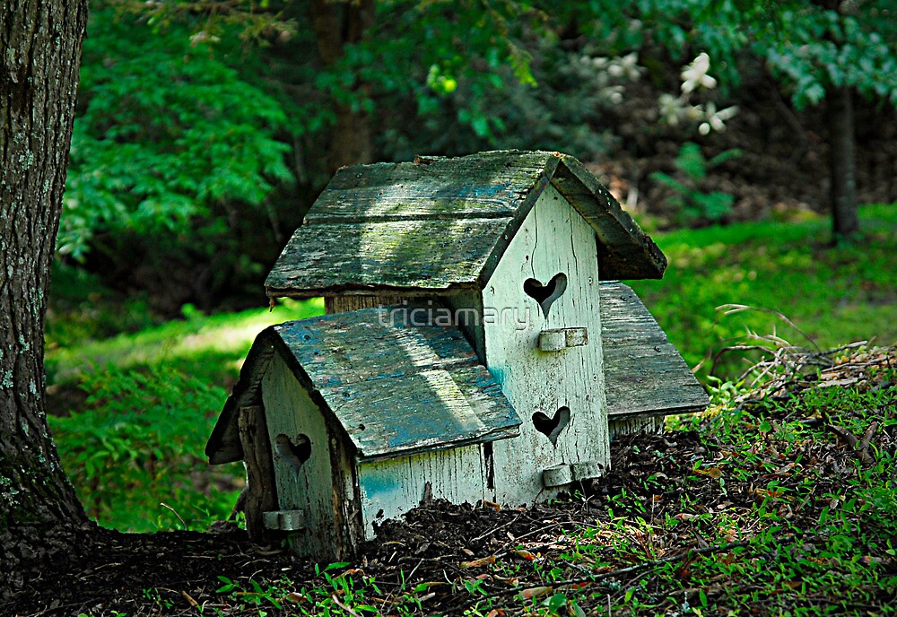 Old birdhouse by triciamary