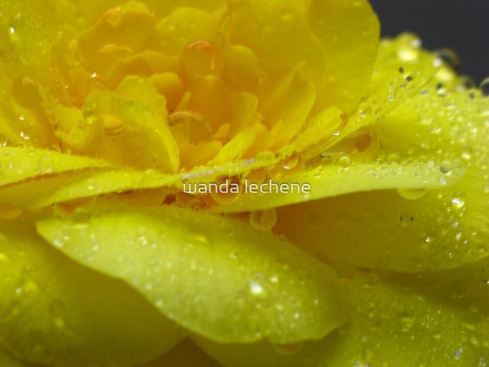Yellow tear drop by wanda lechene