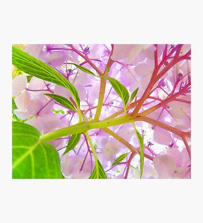 Hydrangea Flower Floral art prints Baslee Troutman Photographic Print