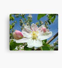 Apple Tree Blossom Flowers art prints Baslee Troutman Canvas Print