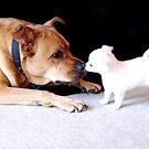 Big dog, tiny pup by MayJ