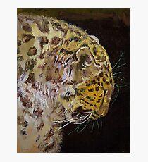 Amur Leopard Photographic Print