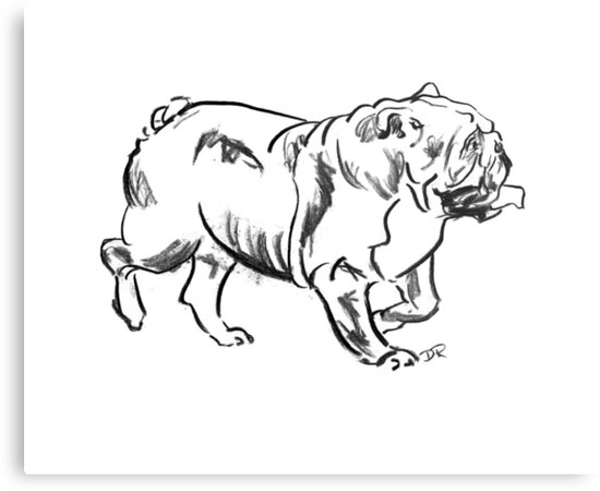 Bulldog Drawing by Douglas Rickard