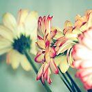 Flowers by Sunil Bhardwaj