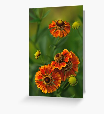 Summer Is Here - Helenium Greeting Card