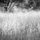 tall grass by linelight