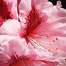 Pink Rhododendron Flower art prints Floral Garden by BasleeArtPrints