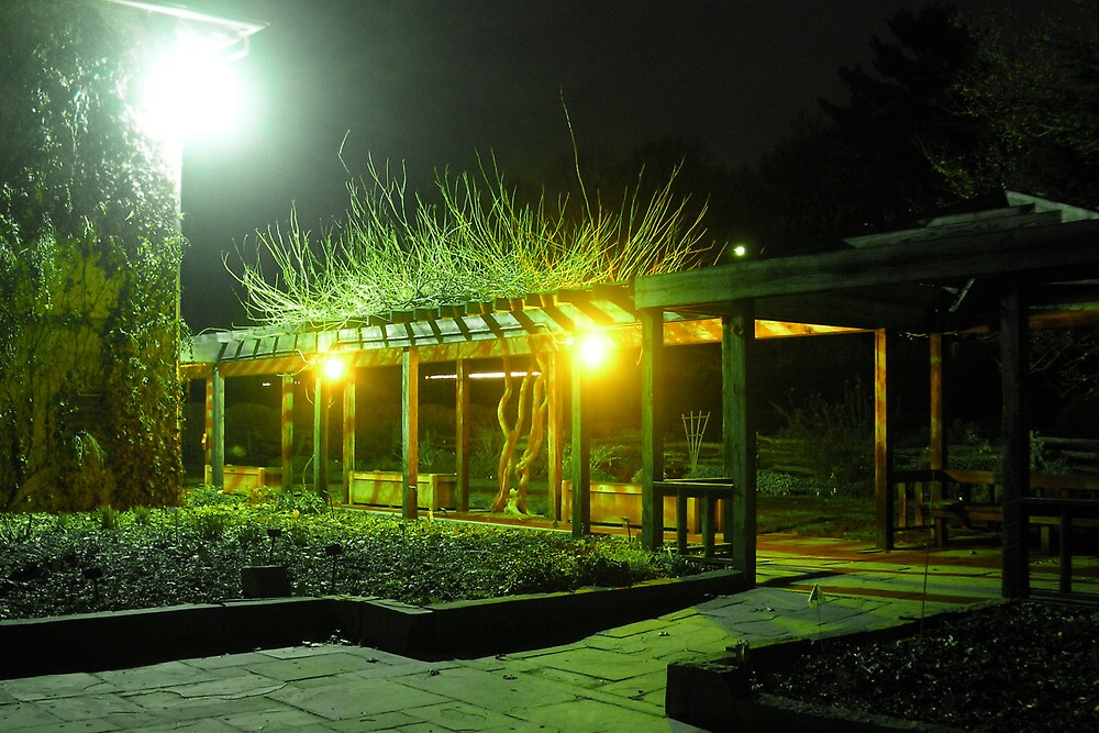 Night at Cornell Plantations by Mark  Reep