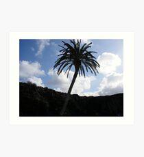 Palm tree in Lanzarote. Art Print