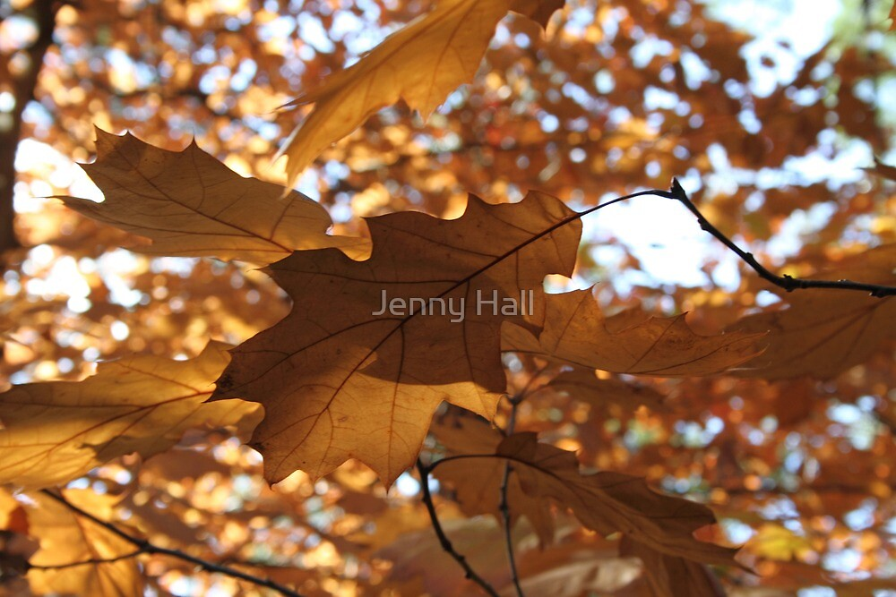 Leaves and shadows by Jenny Hall