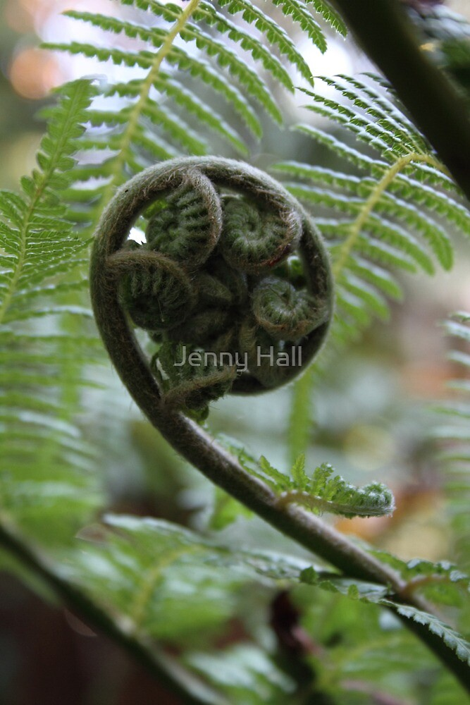 Uncurl by Jenny Hall
