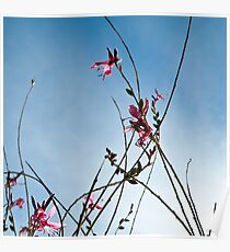 Stratosphere Pink Picotee Poster