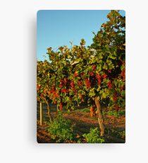 Grape Vines Leinwanddruck