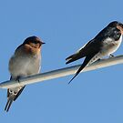 Two Little Dickie Birds by LexieMaddock