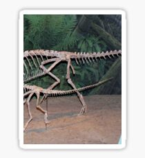 Funky Coelophysis Sticker