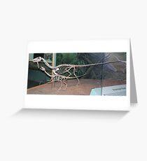 Funky Coelophysis Greeting Card