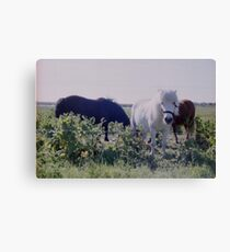 Horses grazing on green meadows Canvas Print