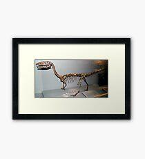 Random Coelophysis Framed Print