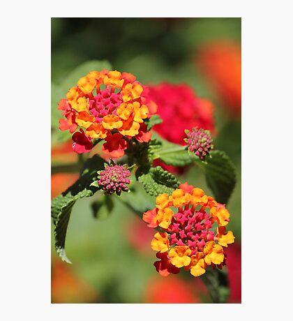 Red Yellow Orange - Beautiful Photographic Print