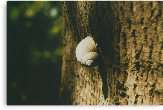 Big snail on a tree trunk by Debja
