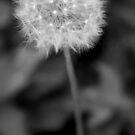 Make a wish by Evette Lisle