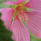 A Touch of Pink by Chris Goodwin