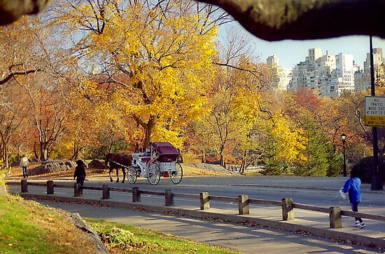 Autumn in Central Park  by Alberto  DeJesus