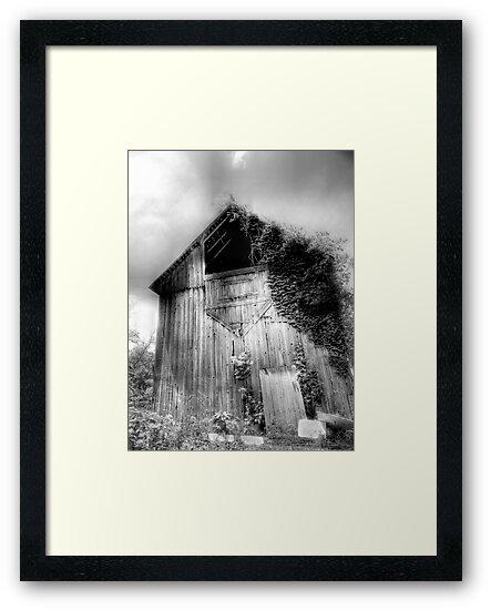 Beautiful Old Barn by Marcia Rubin