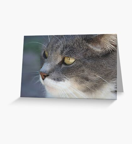 KT Greeting Card
