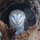 Barn owl by Donovan Wilson