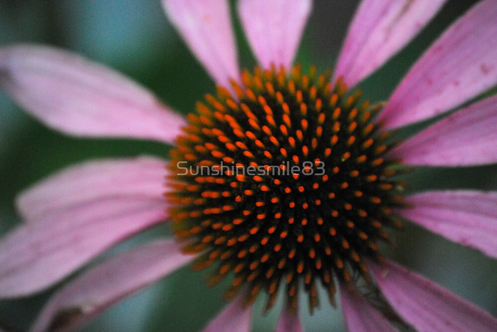 Spike Me Up With Echinacea by Sunshinesmile83
