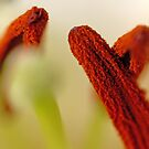 when stamens meet and say hello by lensbaby