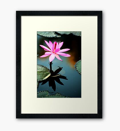 Pink - waterlilly Framed Print