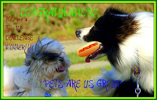 CONGRATULATIONS! - Top 10 Challenge Winner - Pets Are Us  by AndreaEL