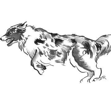 Australian Shepherd Drawing by douglasrickard