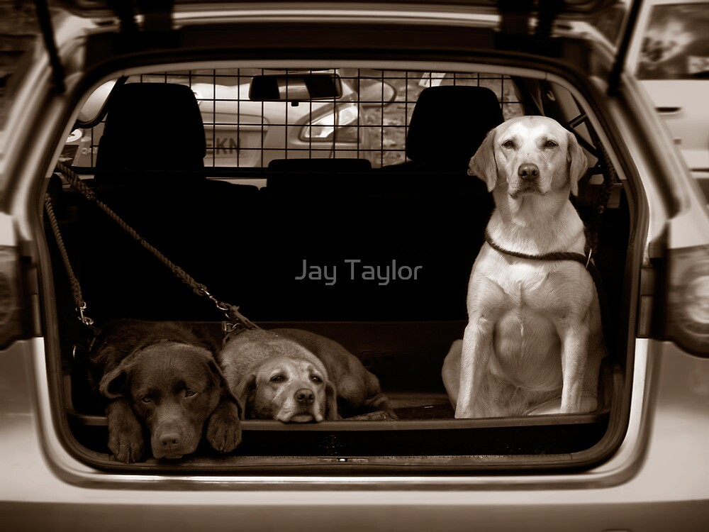 Patience by Jay Taylor