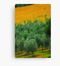 Diagonal Tuscany Canvas Print