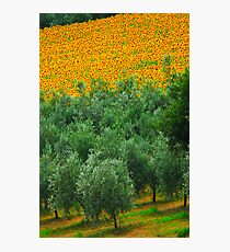 Diagonal Tuscany Photographic Print