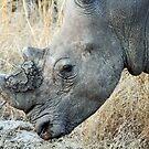 White rhino in profile by jozi1