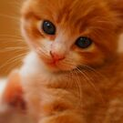 Cute Cat by andreaminerdo