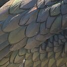 Plumage Detail by Lindamell