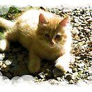 Golden Kitty by teresa731